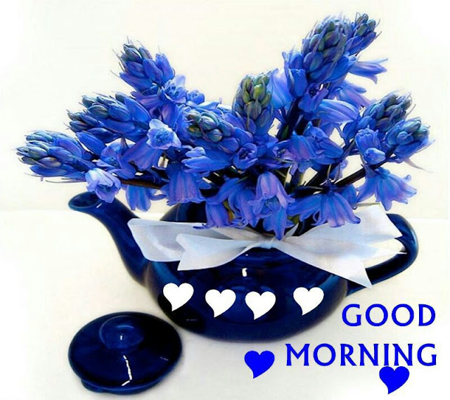 Blue Good Morning Pics