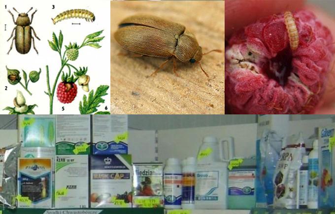 Рекомендации по защите малины