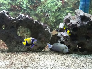 2016.03.14-035 poissons