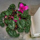 Gardening 2015 - 116_7689.JPG