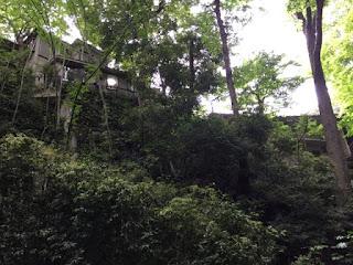 等々力渓谷 / Todoroki Valley