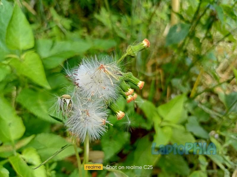 Hasil Foto Kamera Realme C25