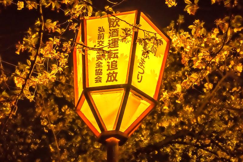 弘前公園 夜桜 ライトアップ 写真9