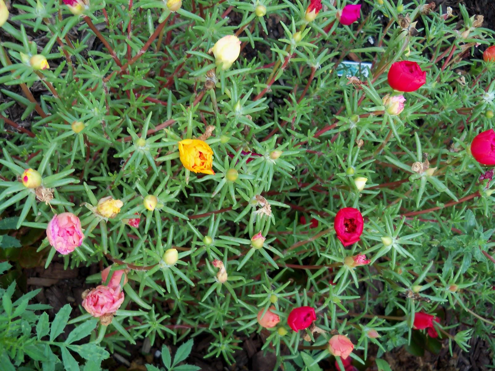Gardening 2010, Part Two - 101_2990.JPG