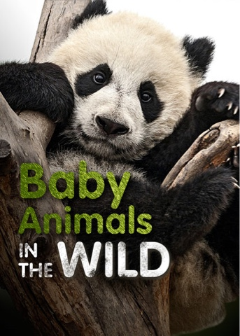 netflix baby animals in the wild top atlanta mom mommy motherhood blogger