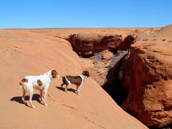 Dogs above the West Fork of Moonshine Wash