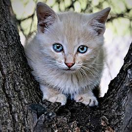 Kitten in tree by Pieter J de Villiers - Animals - Cats Kittens