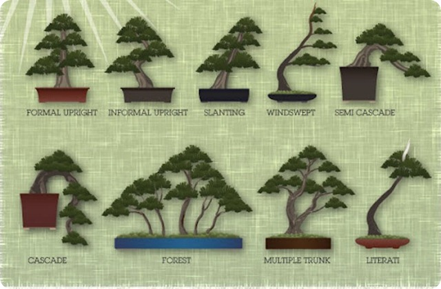 bonsai-infographic-styles
