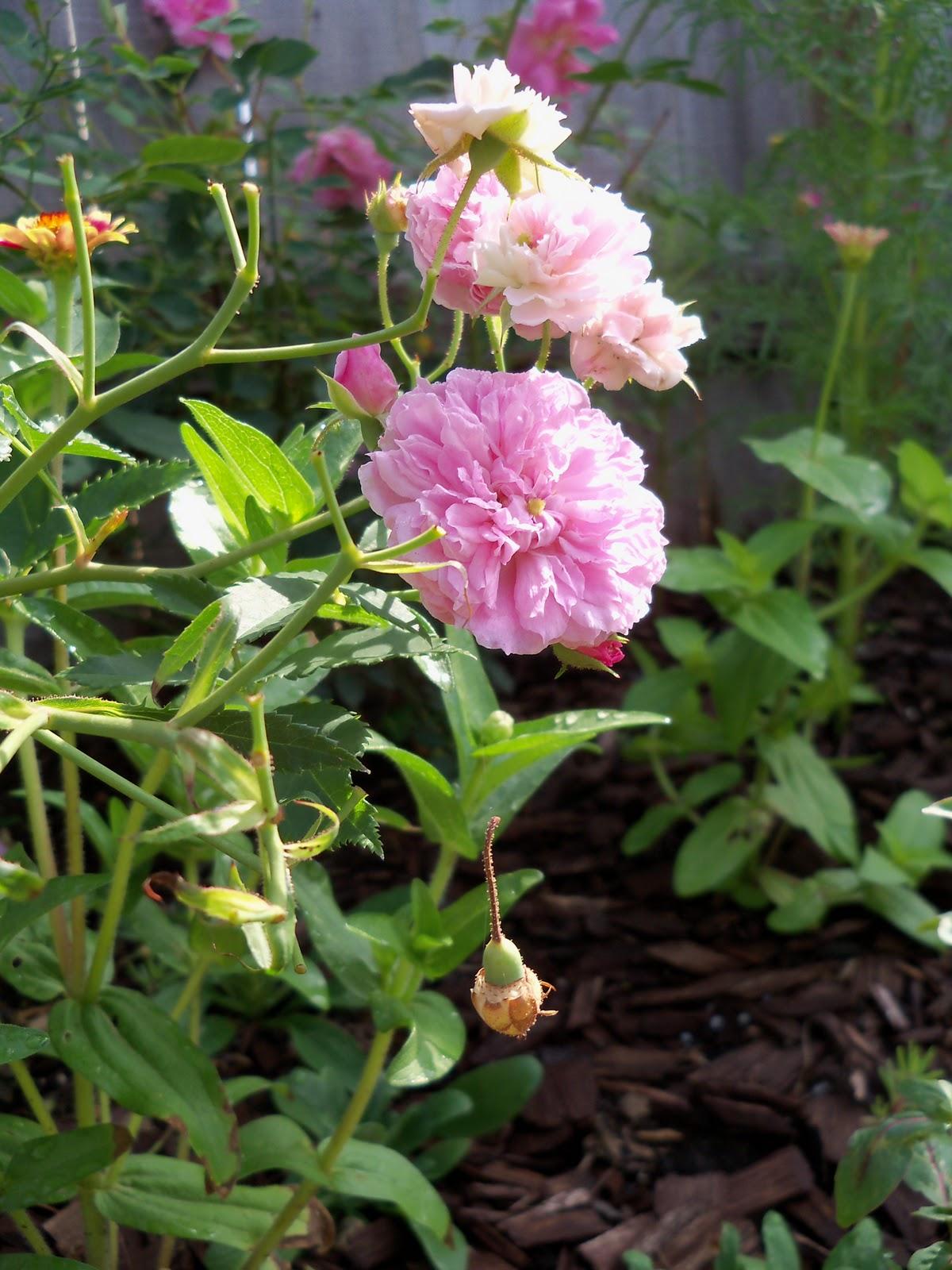 Gardening 2010, Part Two - 101_2390.JPG