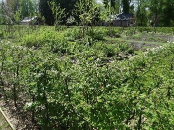 2018.04.21-002 jardin potager