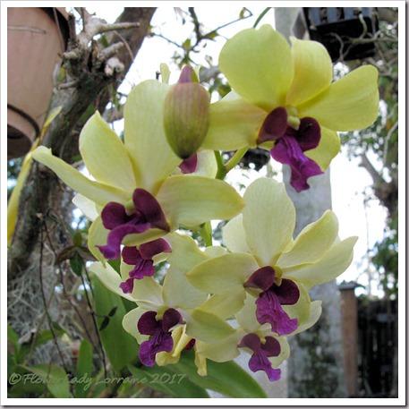 04-20-d-orchid