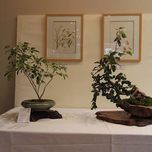 日本文化交流使 オーストラリア(8月)