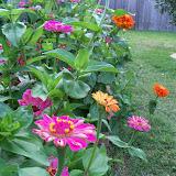 Gardening 2011 - 100_8215.JPG