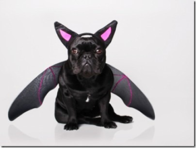 disfraces divertidos para perros  (36)