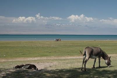 Esel grasen am Ufer des Issyk Köl bei Ottuk