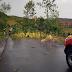На Закарпатті через негоду падали дерева та пошкоджені покрівлі житлових будинків