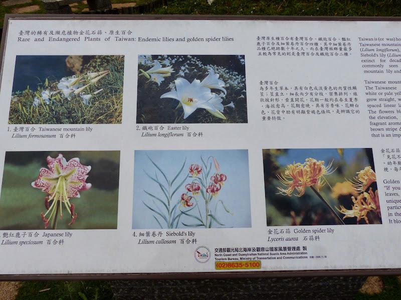 Yangminshan Shitoushan et Jinshan - P1050036.JPG
