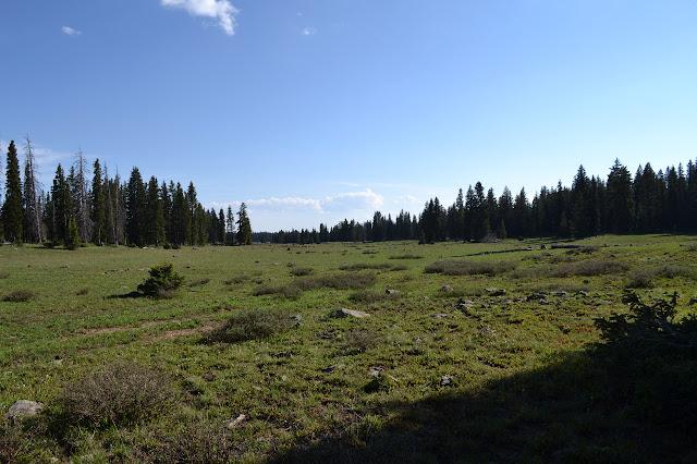 flat grasslands