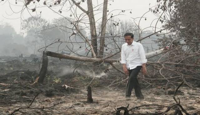 WALHI: Konyol! Pasal Penjerat Pembakar Hutan Dihapus Jokowi di Omnibus Law