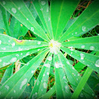 20120902-01-plant-green.jpg