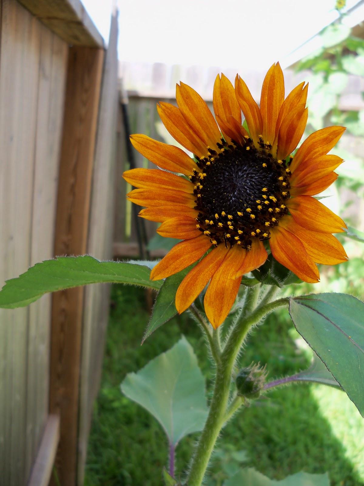Gardening 2010, Part Three - 101_3838.JPG