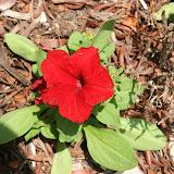 Gardening 2012 - IMG_3863.JPG