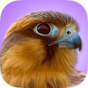 App iBird Pro Birds North America APK for Windows Phone