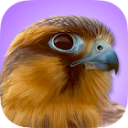 iBird Pro Birds North America icon