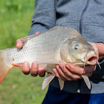 20160710_Fishing_Grushvytsia_015.jpg