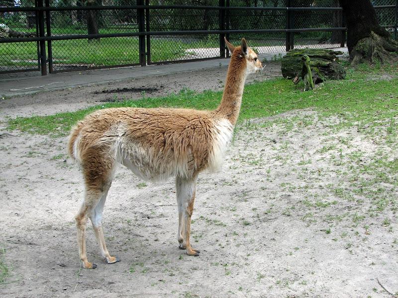 Warszawskie zoo - img_6315.jpg