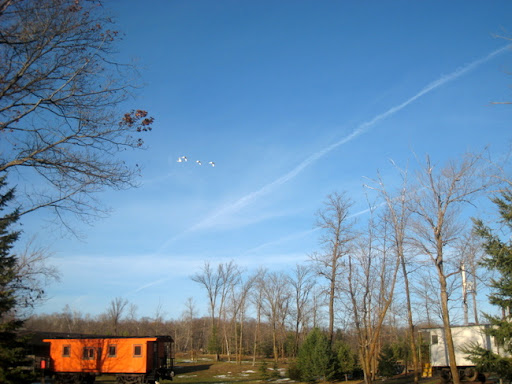 Swans flying over the Swithyard (cabooses at Maplelag)