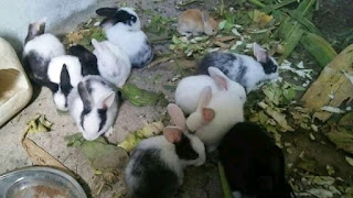 Start a rabbit farm bussiness in Nigeria with little money