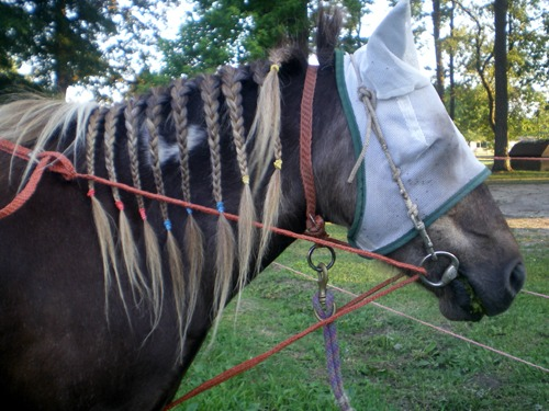 Stuffy with balancing side reins - 2009