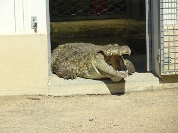 2018.08.21-003 crocodile