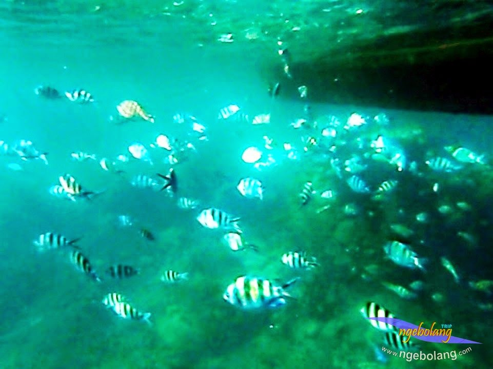 explore-pulau-pramuka-olp-15-16-06-2013-14