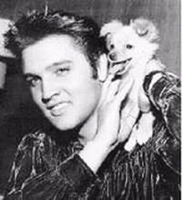 Elvis Presley and his pomeranian