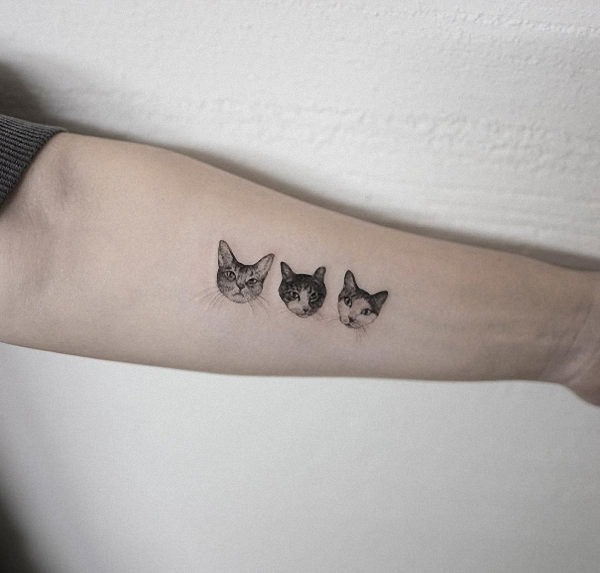 estes_trs_gatos
