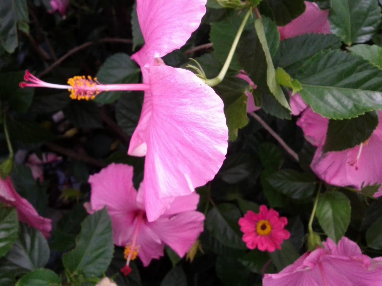 Gardening 2013 - IMG_20130526_103332.jpg