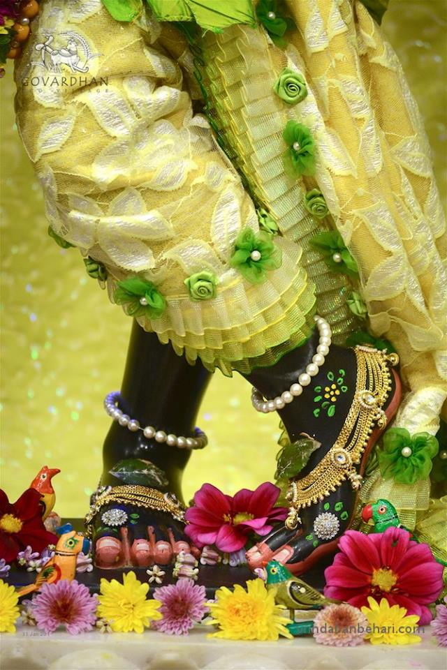 ISKCON GEV (Wada) Deity Darshan 31 Jan 2016 (9)