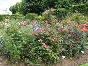 2017.08.10-038 la roseraie des vivaces