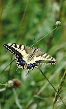 mariposas yotros 160.JPG
