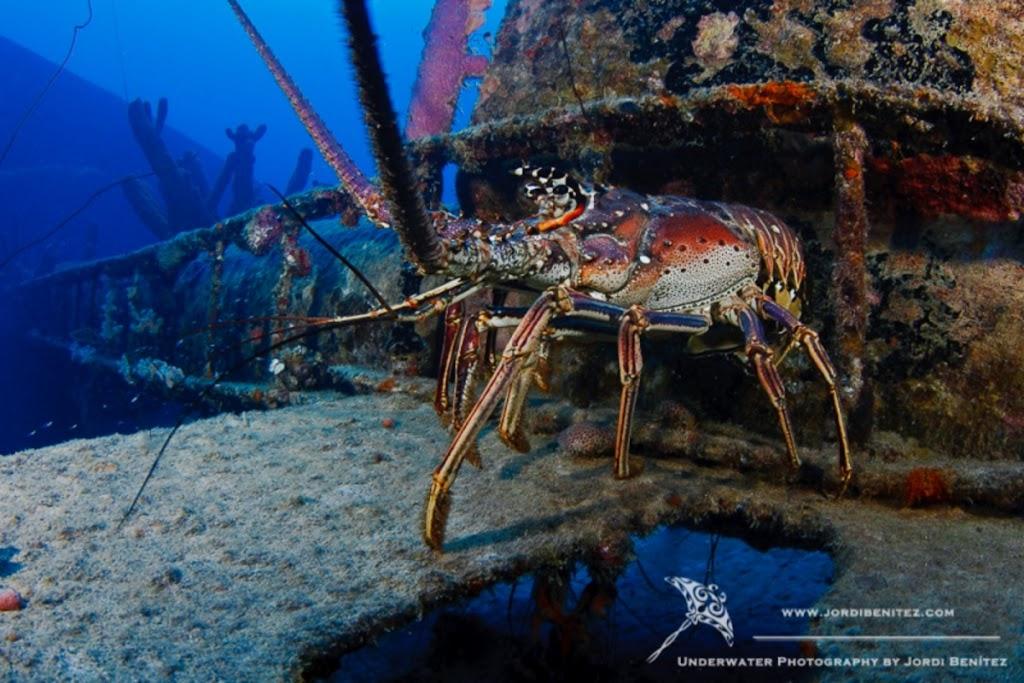 Bonaire: Langostas XXL