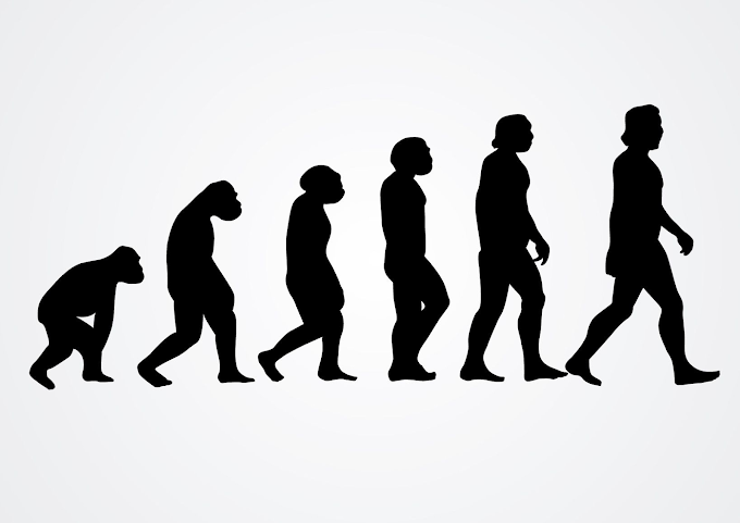 The Origin of Human Beings: Physical Features and Lifestyle