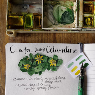 Celandine :: www.AliceDrawsTheLine.co.uk