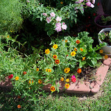 Gardening 2010, Part Three - 101_3688.JPG