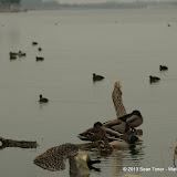 01-26-13 White Rock Lake - IMGP4326.JPG