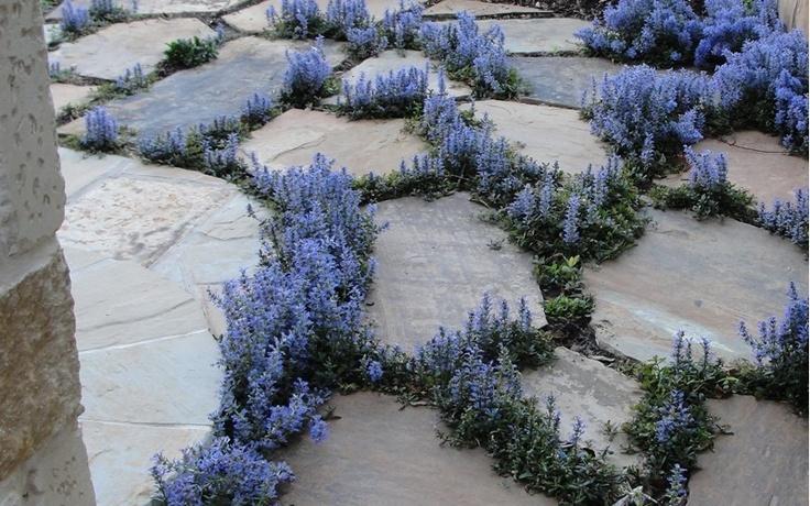 Trifolium repens (ibridi da seme?) e altre tappezzanti per ...