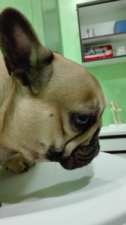 [La+sindrome+brachicefalica+nel+cane%5B5%5D]