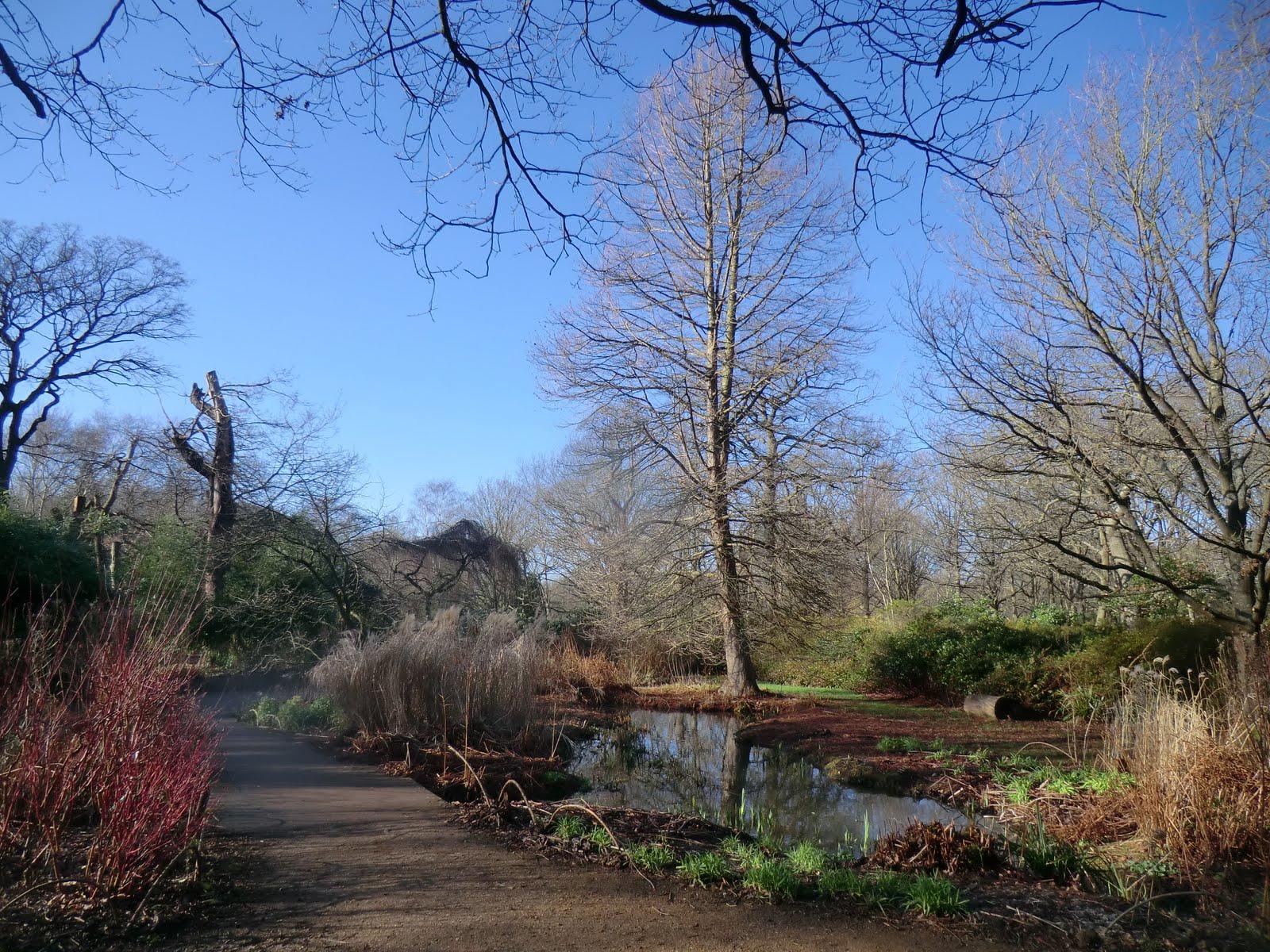 CIMG2445 Bog Garden, Isabella Plantation