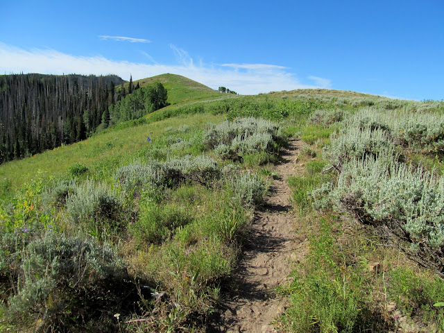 Trail on the Candland Mountain ridge